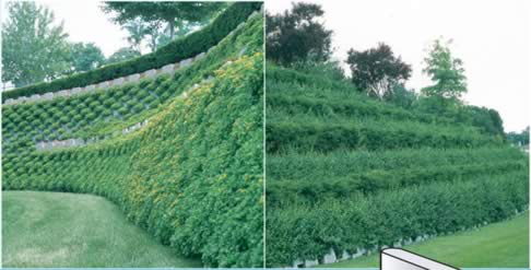 Vegetated Wall